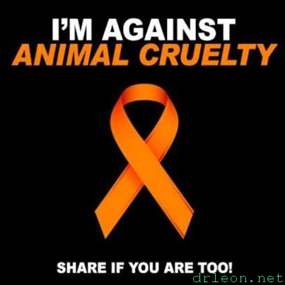 against-animal-cruelty
